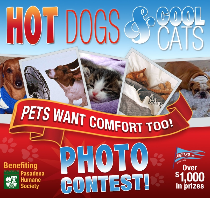 Hot Dogs & Cool Cats Photo Contest